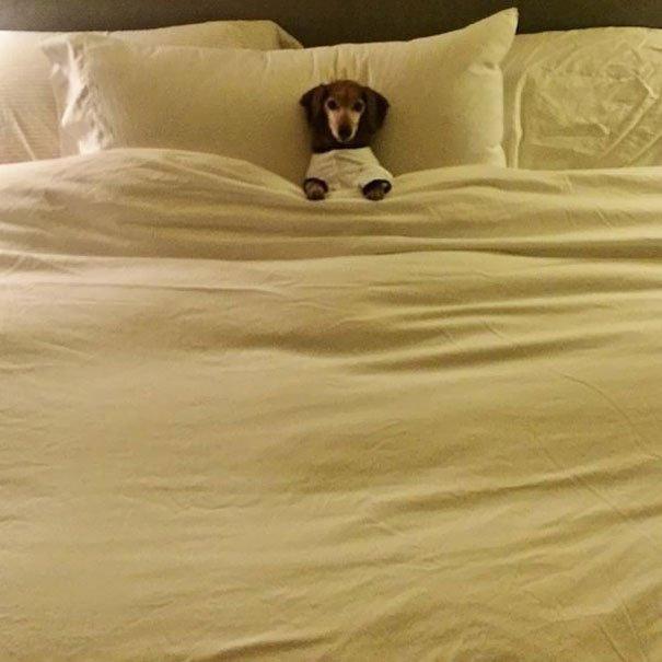 dog sleeping bed funny 2 605