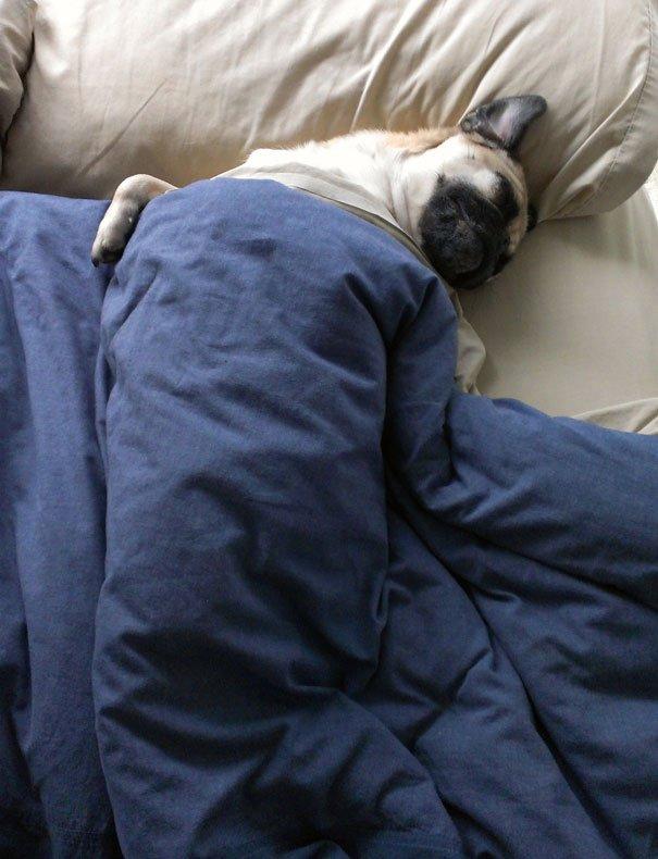 dog sleeping bed funny 8 605