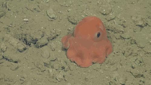 octopus adoriblis pacman ghost 3