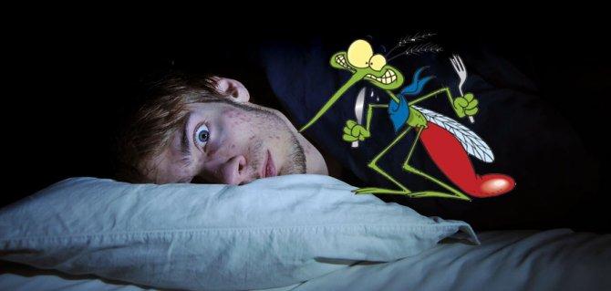 zanzara-notte