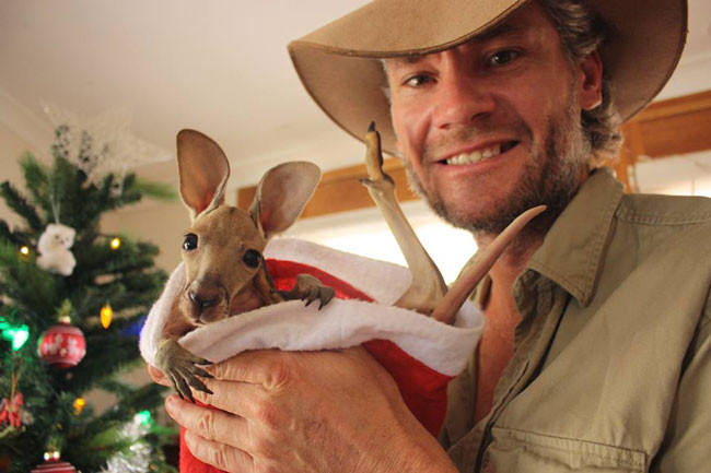 Good-guy-has-saved-28-orphan-baby-kangaroos-after-their-moms-were-killed-by-cars11-650x433