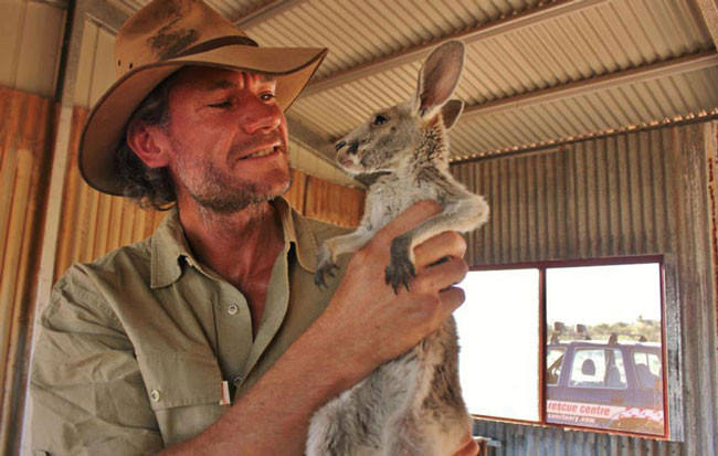 Good-guy-has-saved-28-orphan-baby-kangaroos-after-their-moms-were-killed-by-cars21-650x413