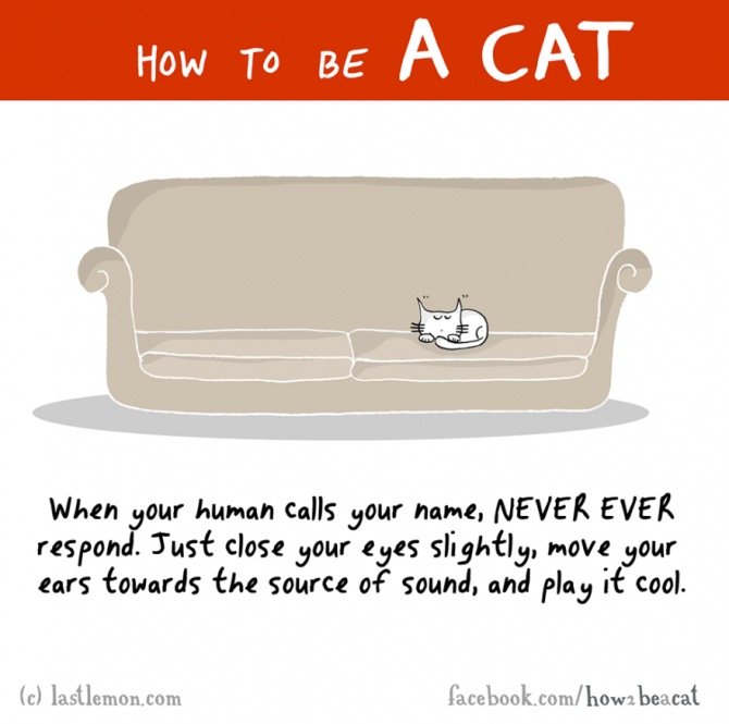 how to be a cat funny illustration last lemon 10 880