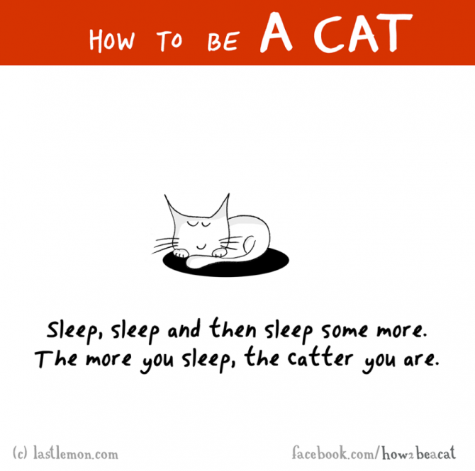 how to be a cat funny illustration last lemon 12 880