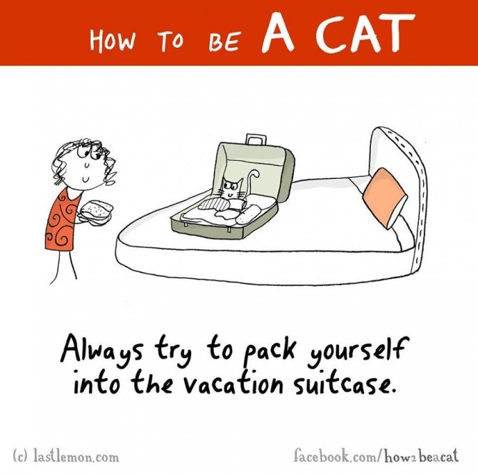 how to be a cat funny illustration last lemon 13 880