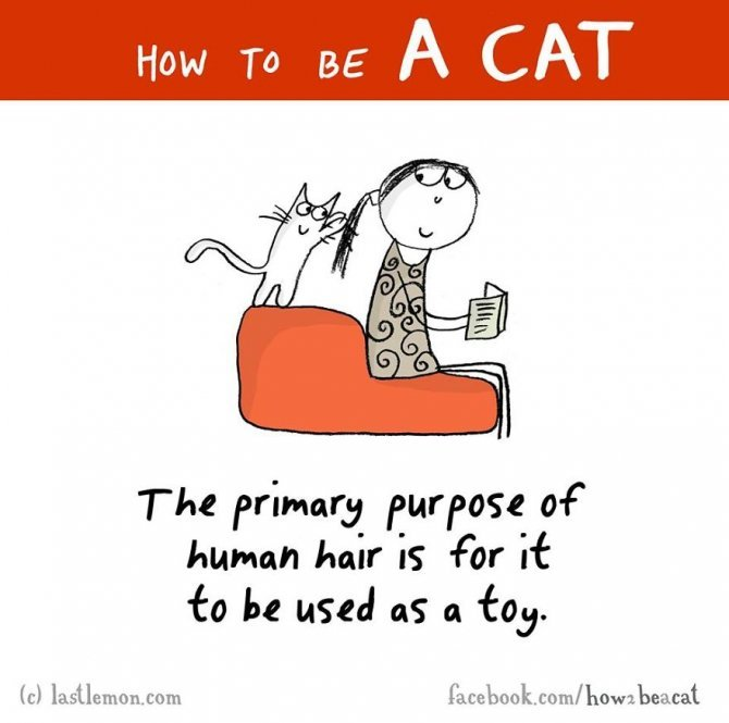 how to be a cat funny illustration last lemon 14 880