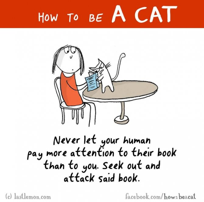 how-to-be-a-cat-funny-illustration-last-lemon-15__880