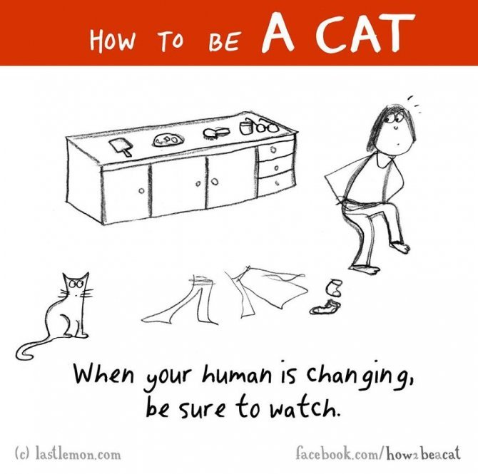how to be a cat funny illustration last lemon 16 880