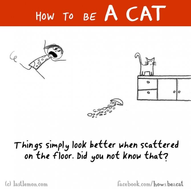 how-to-be-a-cat-funny-illustration-last-lemon-17__880