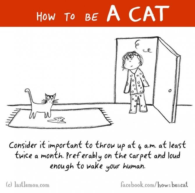 how to be a cat funny illustration last lemon 24 880