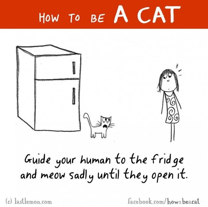 how to be a cat funny illustration last lemon 30 880
