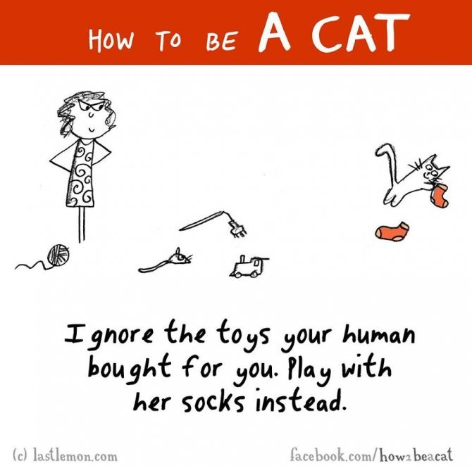 how to be a cat funny illustration last lemon 32 880