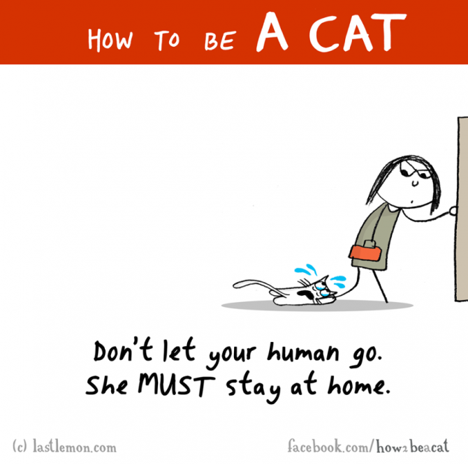 how-to-be-a-cat-funny-illustration-last-lemon-34__880