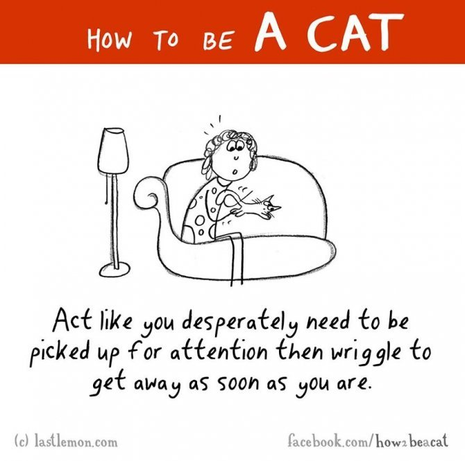 how to be a cat funny illustration last lemon 43 880
