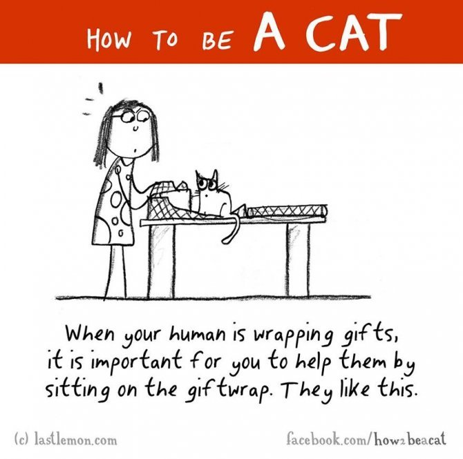 how to be a cat funny illustration last lemon 47 880