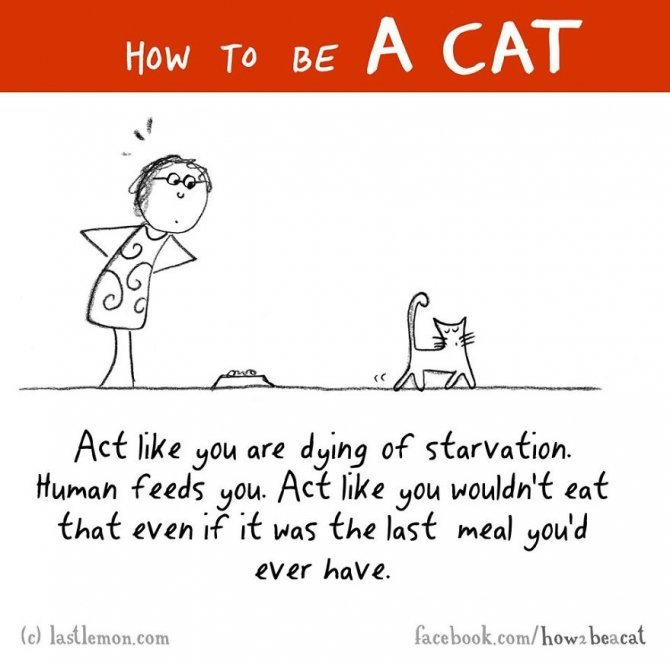 how to be a cat funny illustration last lemon 48 880