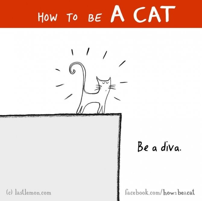 how-to-be-a-cat-funny-illustration-last-lemon-51__880