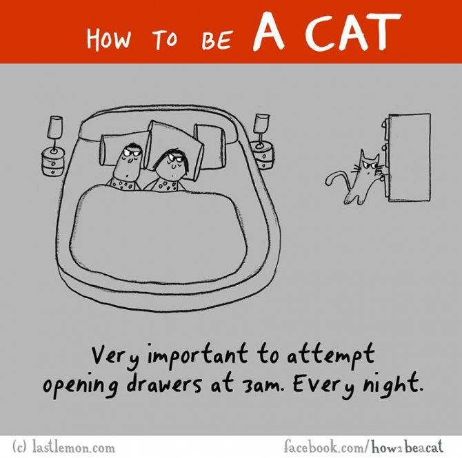 how to be a cat funny illustration last lemon 56 880