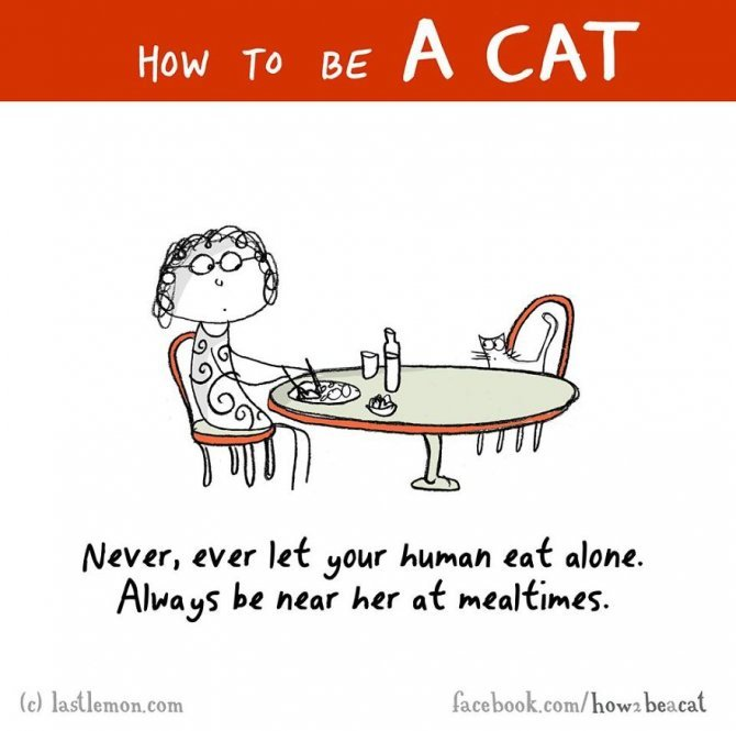 how to be a cat funny illustration last lemon 5 880