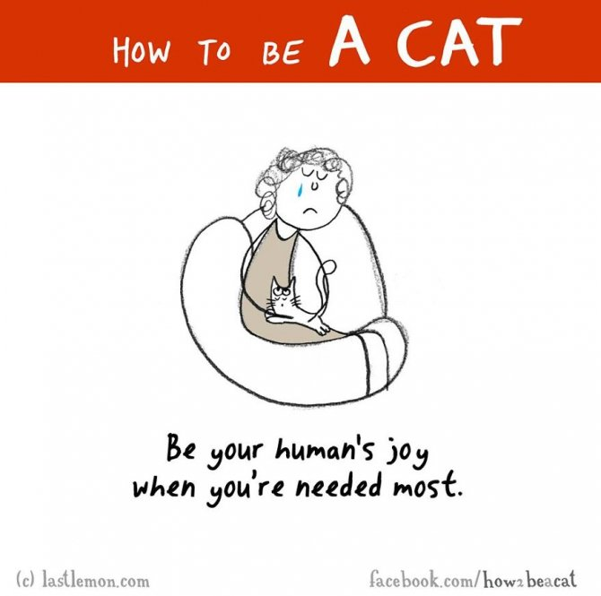 how-to-be-a-cat-funny-illustration-last-lemon-63__880