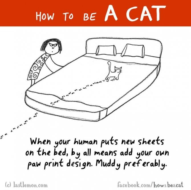 how to be a cat funny illustration last lemon 65 880