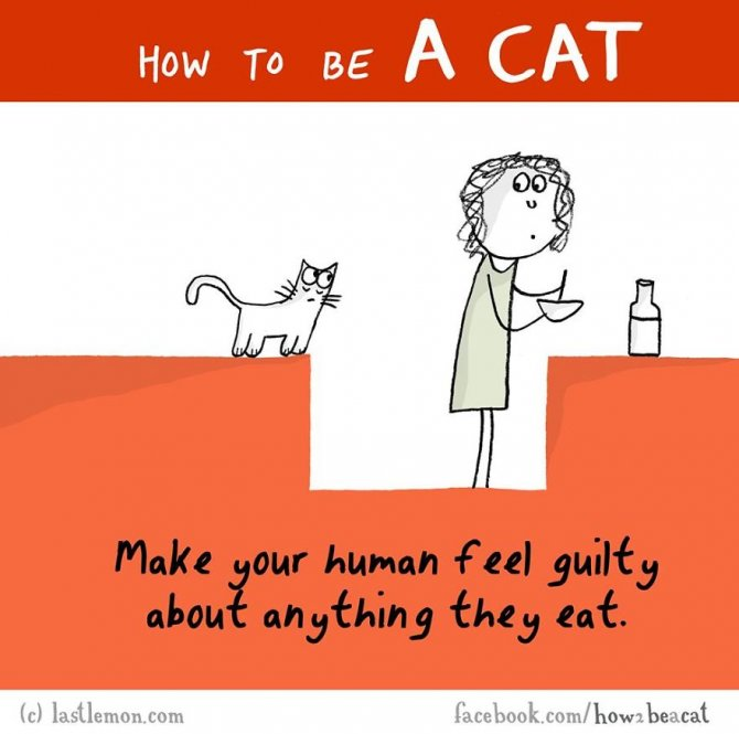 how-to-be-a-cat-funny-illustration-last-lemon-69__880