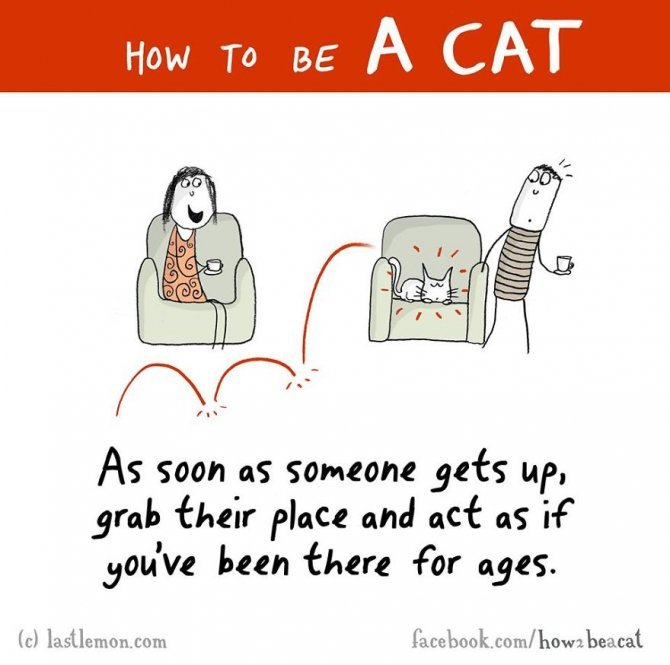 how to be a cat funny illustration last lemon 84 880