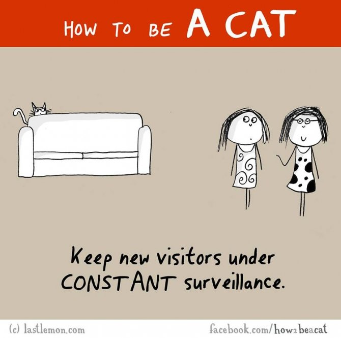 how-to-be-a-cat-funny-illustration-last-lemon-94__880