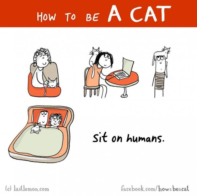 how to be a cat funny illustration last lemon 99 880