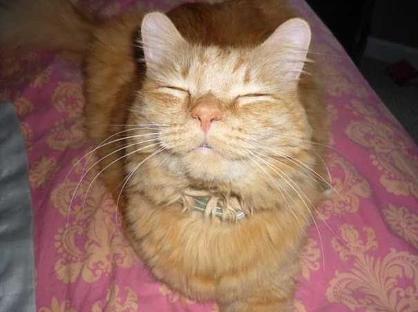 smiling-cat-1__605