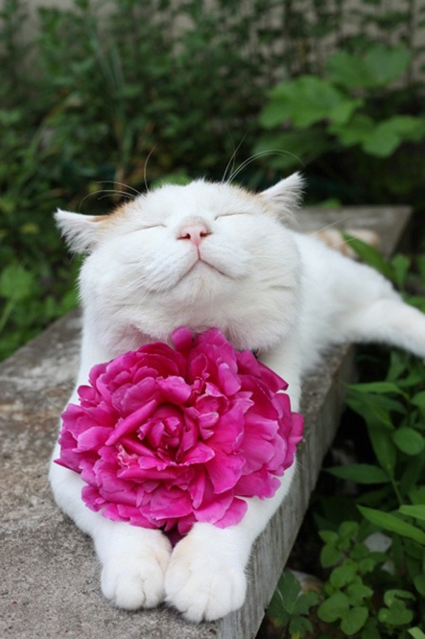 smiling-cat-32__605