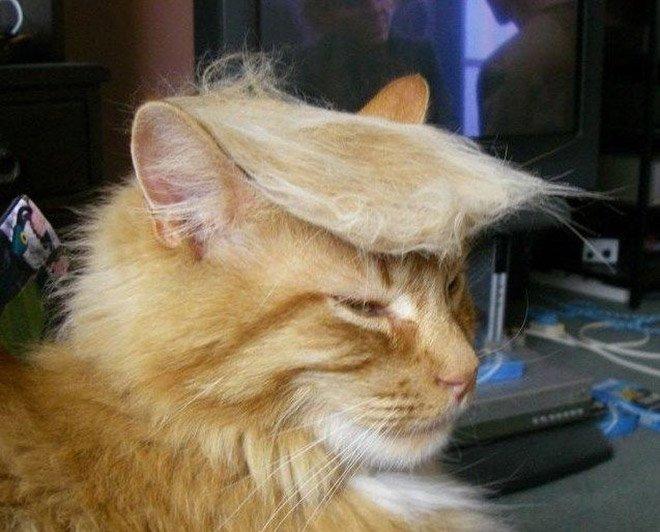 trump cat1