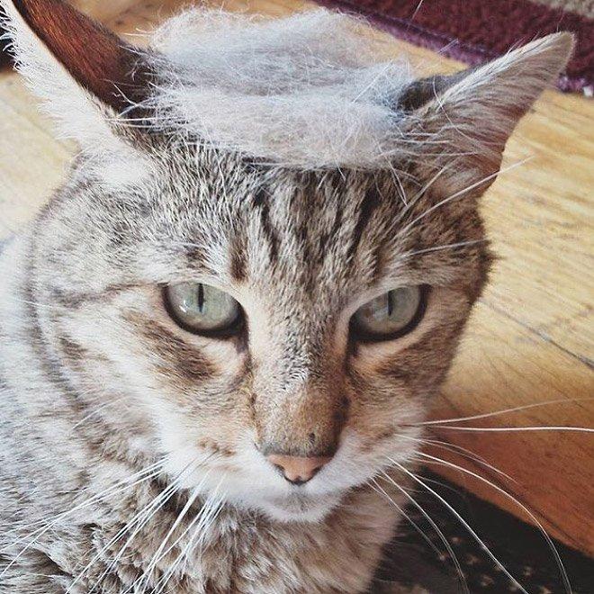 trump cat11