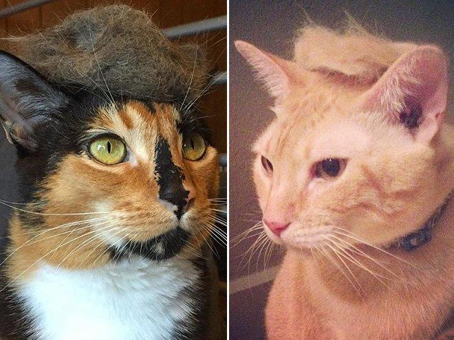 trump cat12
