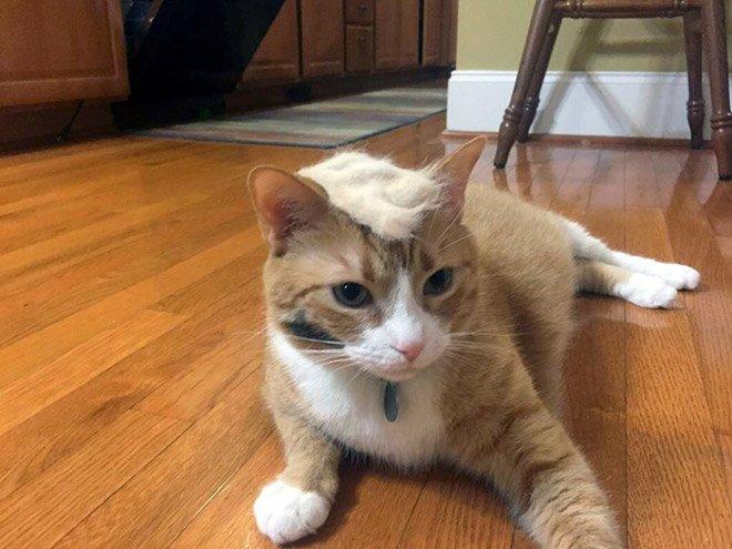 trump cat13