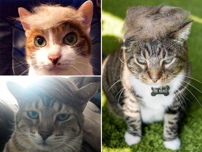 trump cat14