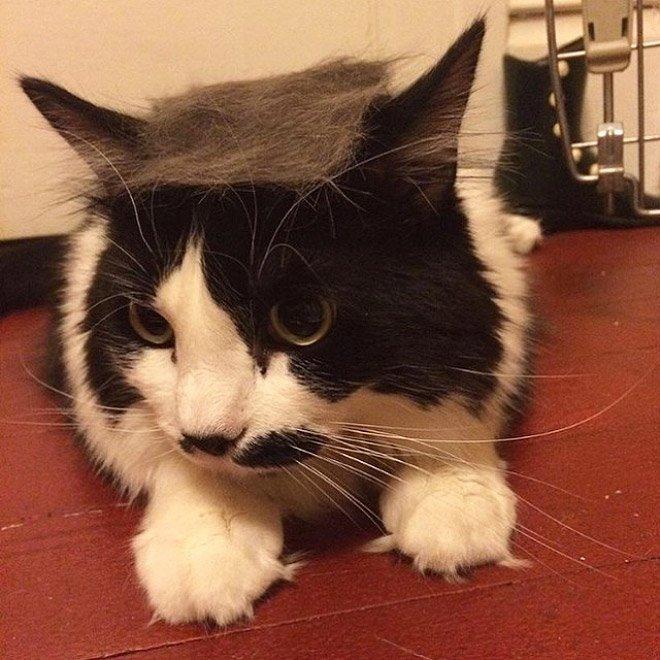 trump cat15