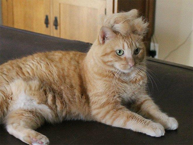 trump cat17