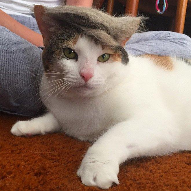 trump cat18