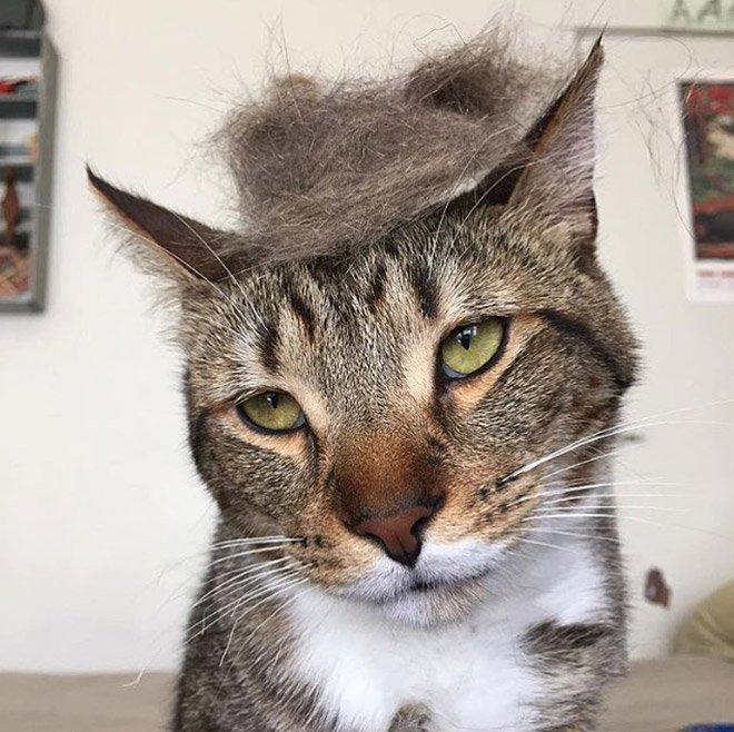 trump cat4