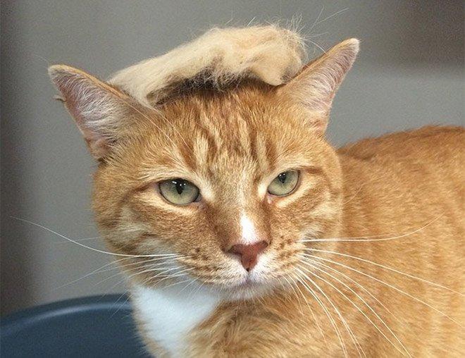 trump cat5