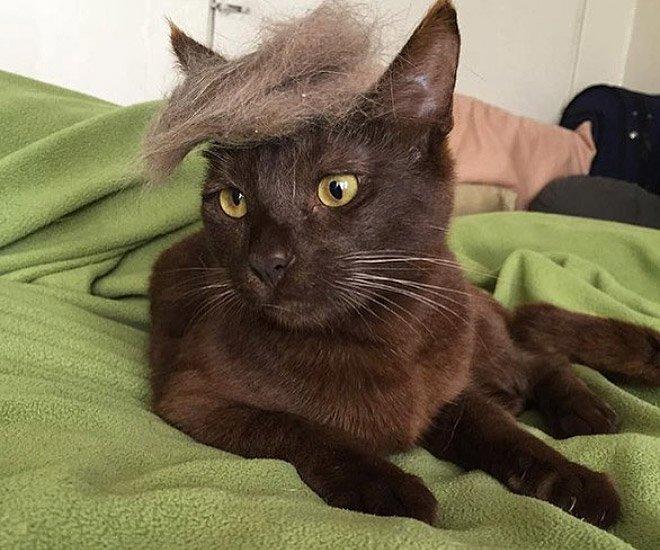 trump cat7