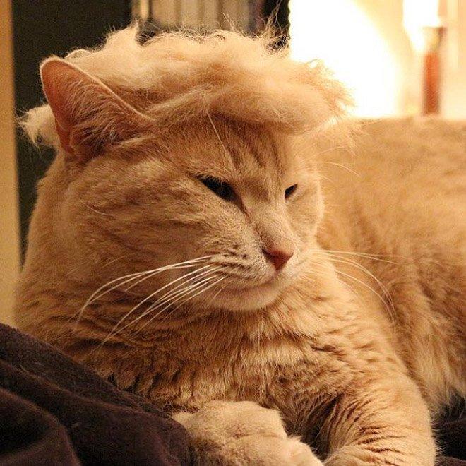trump cat8