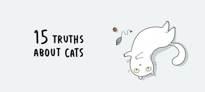 cat doodles 001 880