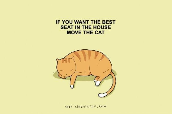 cat doodles 002 880