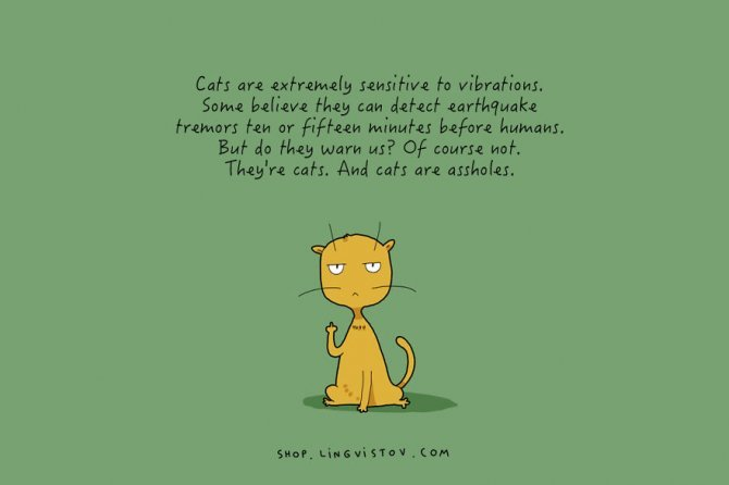 cat doodles 012 880