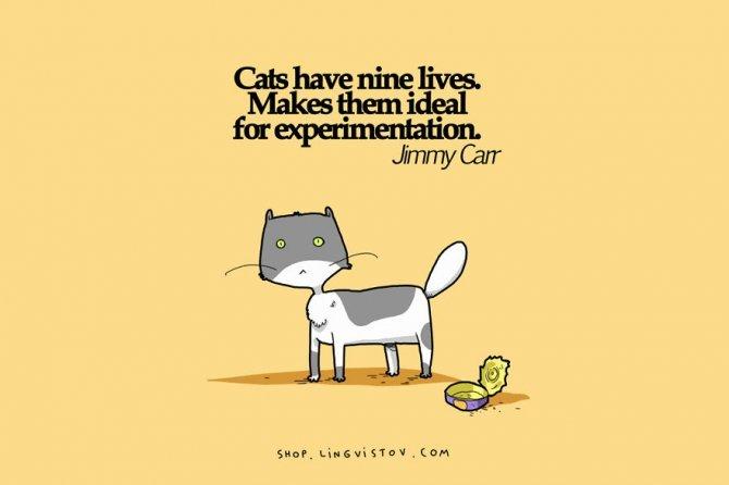 cat doodles 013 880