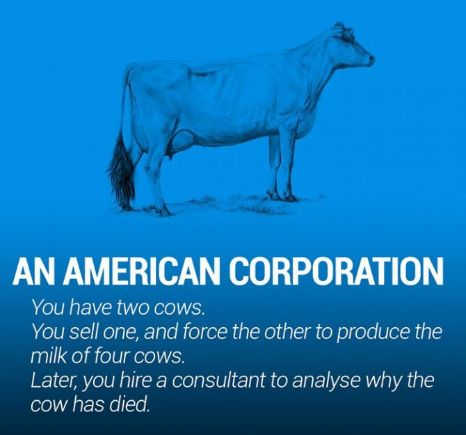 corperation economies explained cows ecownomics 27 700