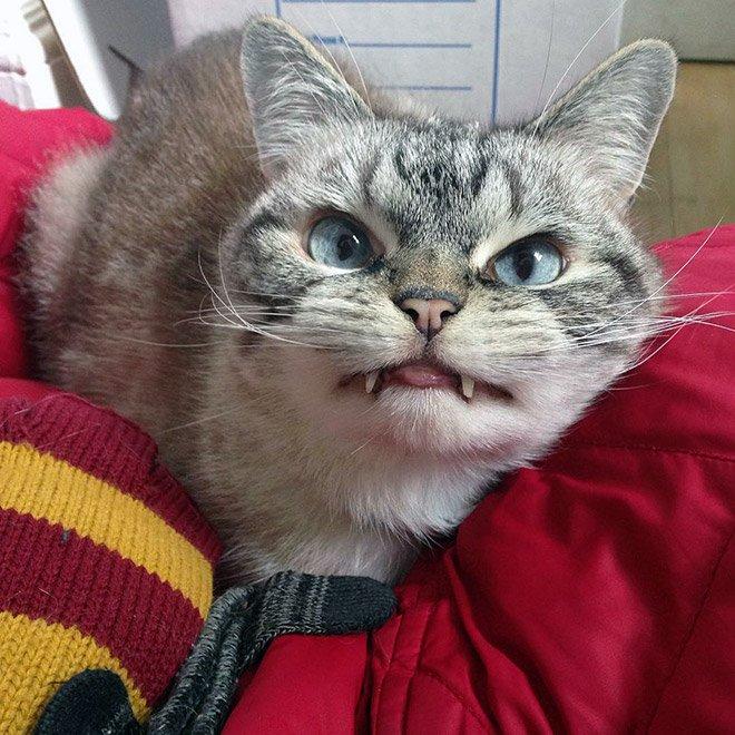 gatto vampiro 1