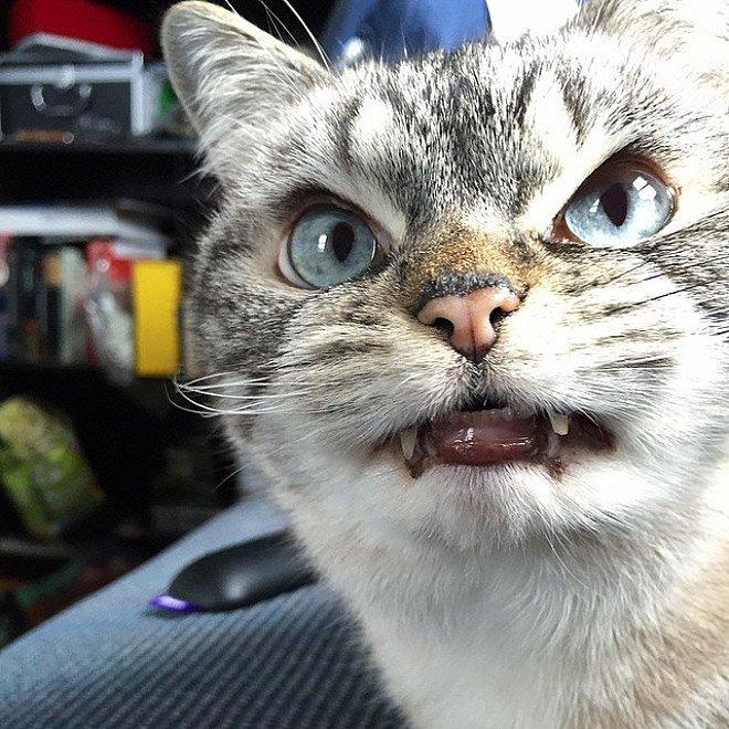 gatto vampiro 11